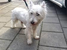 Politie bevrijdt hondje uit snikhete auto in Vlissingen