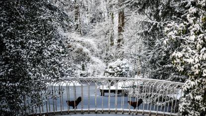 FOTOALBUM: Sneeuw blijft mooie beelden opleveren, maar ook wat ellende