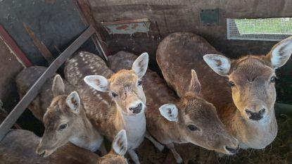 """Vijftigtal dieren in beslag genomen in Dilbeek, eigenaar werkt in slagerij in Brussel: """"Her en der lagen kadavers te rotten. Schrijnend!"""""""