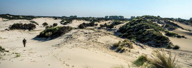 Natuurpark Hollandse Duinen. Beeld null