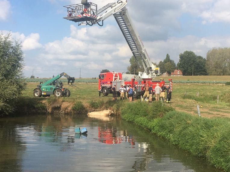 De brandweer hielp de stier op het droge.