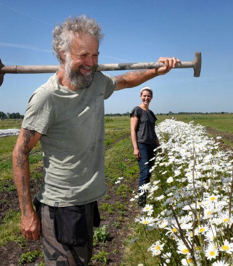 Opvolgers gezocht voor biologische tuinderij De Groenteboer: 'Het is een manier van leven'