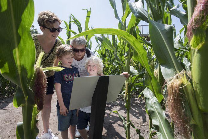 Beeld uit 2019: oma De Wals uit Nijverdal speurt met haar kleinkinderen uit Deventer en hun tante naar een uitweg uit het maïsdoolhof.