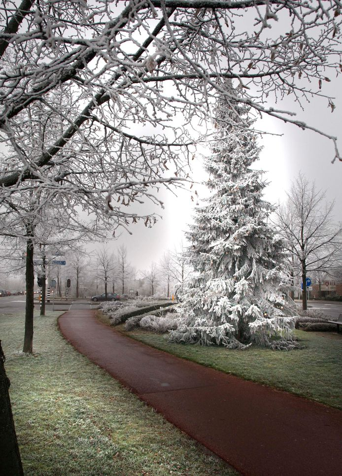 In het verleden plaatste de gemeente Zutphen een kerstboom bij het kruispunt aan de IJssel in De Hoven.