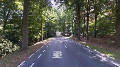 """Bomen langs Brugse Steenweg worden gerooid: """"Pas uw snelheid aan"""""""