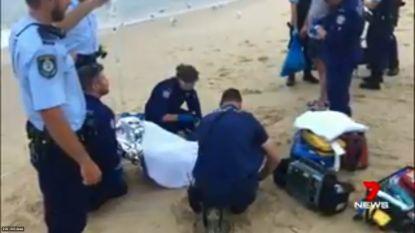Vrouw overleeft zeldzame aanval door witte haai nabij Sydney