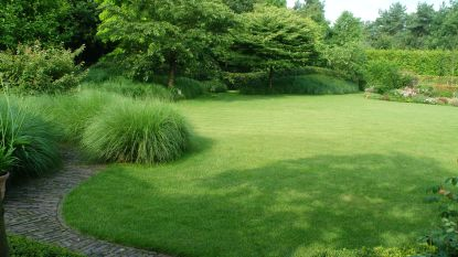 """""""Dat biljartgroene gazon zien we nooit meer terug, maar het kan anders"""": tuinspecialist legt uit hoe je je tuin hittebestendig maakt"""