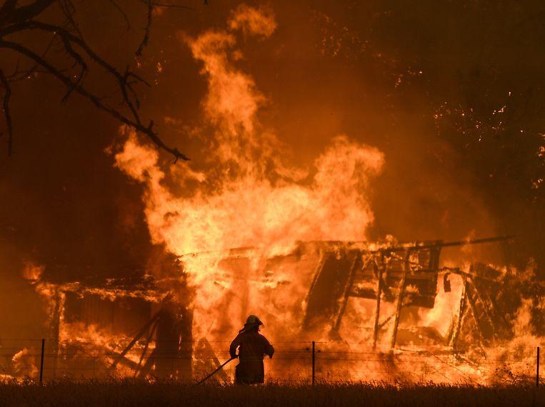 De staat New South Wales wordt zwaar getroffen door bosbranden. Beeld EPA