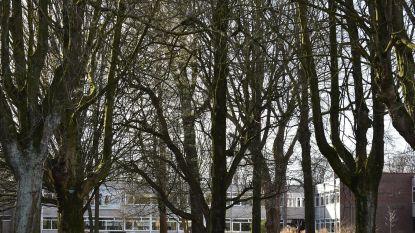 Stadspark en Raadsherenpark gesloten wegens storm, voetbalwedstrijd kan wel plaatsvinden