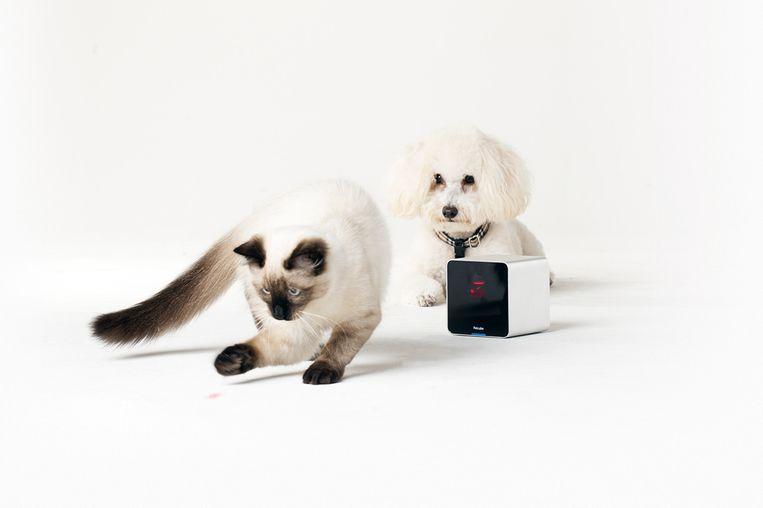 Kat speelt met laserlampje. Beeld Petcube