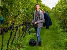 Reestlandhoeve uit Balkbrug heeft een rijke druivenoogst