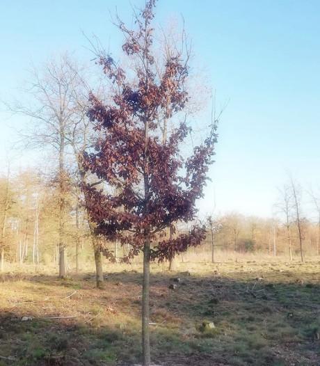 'Dennis-boom' geplant op Sallandse Heuvelrug