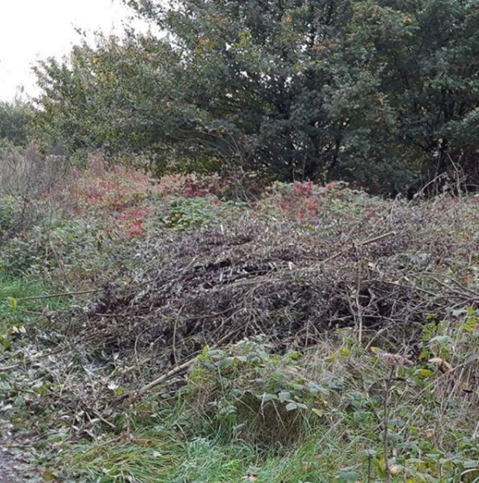 Het gedumpte snoeiafval aan de Oostelijke Schelde Rijnweg in Reimerswaal