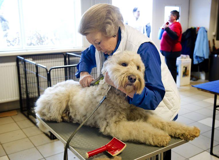 Prinses Beatrix is ook een hondenliefhebber. Ze hielp laatst met kammen in het hondentrainingscentrum van Molenschot, in het kader van NL doet. Beeld ANP