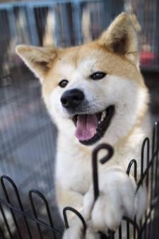 Hond aan de Prozac om rustig te blijven na bijten buurmeisje