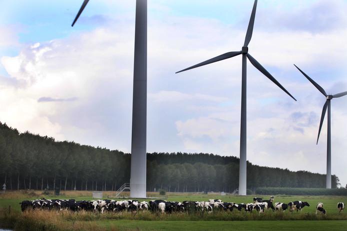 Naast de windmolens die er al staan, moeten er volgens de plannen nog vijf tot zeven windmolens verrijzen in het Culemborgse buitengebied.