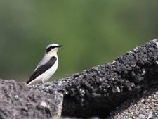 Vliegbasis trekt steeds meer zeldzame vogels