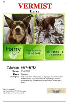 Hond Harry heeft epilepsie en is al dagen zoek: baasje uit Vaassen is wanhopig