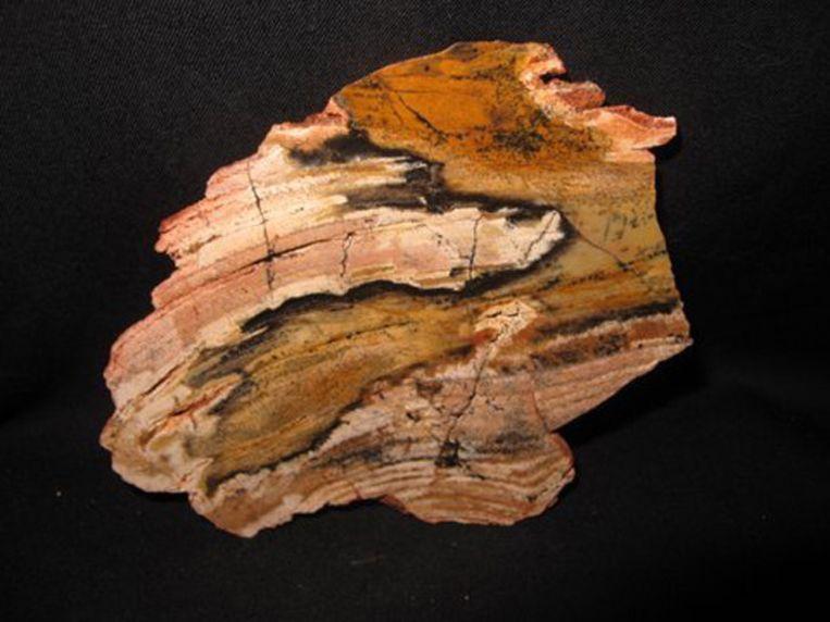 De stromatoliet van 3,4 miljard jaar oud. Beeld Catawiki