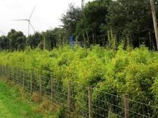 Grote vraagtekens bij proef Eindhoven Airport met plantenschermen