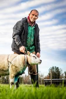 Fop is hobbyboer in de polder: 'Door de schapen ben ik buiten'