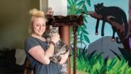 """Katten kunnen op hotel in Bagheera's Jungle: """"We hebben zelfs een antistresskamertje"""""""