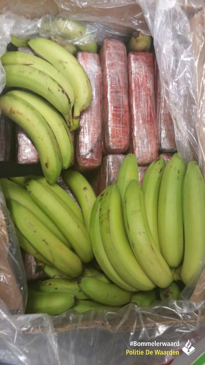 Tussen de bananen werd 12 kilo cocaïne gevonden.