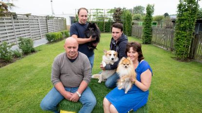 Geen Roefeldag bij hondenfokker na oproep van An Lemmens