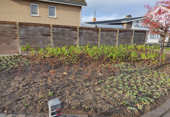 De perkjes werden op duurzame wijze heraangeplant.