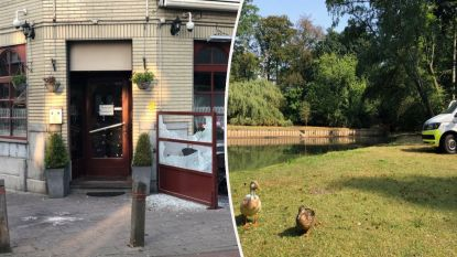 Opnieuw aanslag met granaat op pitazaak in Antwerpen, ook in vijver park Ekeren granaat gevonden