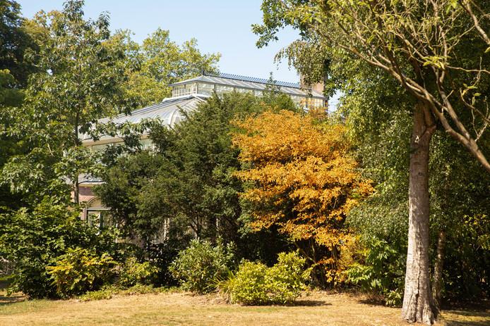 Hier en daar schieten uitgedroogde bomen en struiken al in de herfststand, zoals hier in Baarn