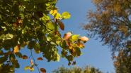 """Gemeente verwijdert bomen aan De Boskabouters: """"Beschadigd na droge zomer"""""""