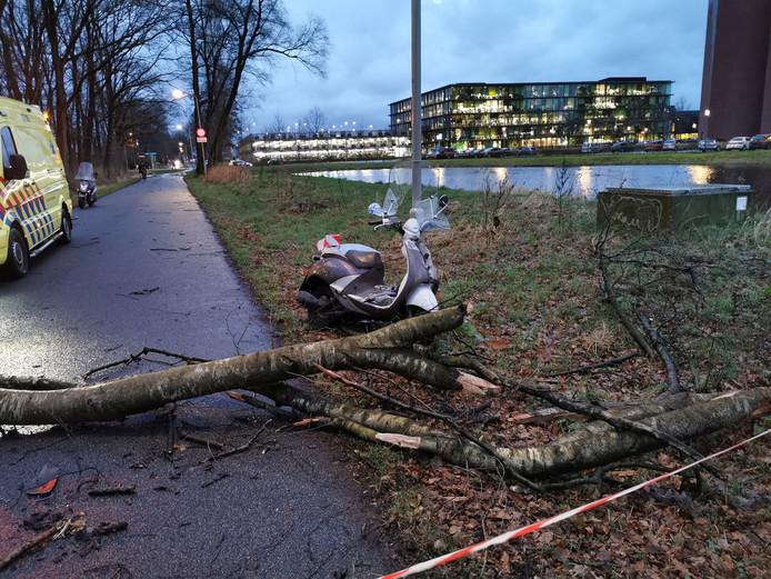 De boom is op het fietspad gevallen
