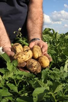 Zilte teelt groenten op grote schaal mogelijk