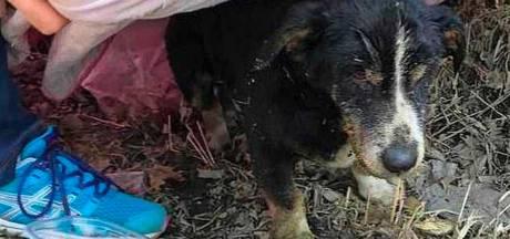 Hond die levend werd begraven door zijn baasje klautert uit graf