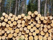 Staatsbosbeheer betreurt verwarring bomenkap