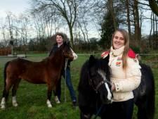 Hele heisa in Ermelo om vanwege vuurwerk ontsnapte pony's te vangen