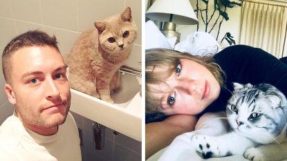Het is International Cat Day vandaag: deze sterren zijn geobsedeerd door hun kat