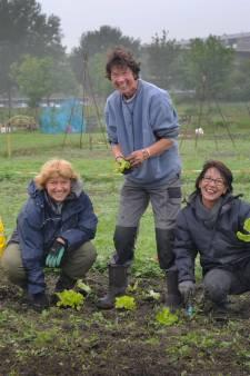 City Seeds kijkt naar Driewegenhof Middelburg als nieuwe locatie