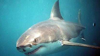 Meisje van 12 tweede slachtoffer van haai in 24 uur bij toeristische Whitsundayeilanden