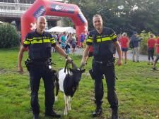 'Trouble' dreigde A10 op te rennen, maar finisht in Amstelpark