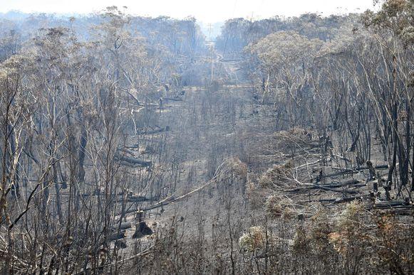 Verbrande bomen in de Blue Mountains ten noordwesten van Sydney.