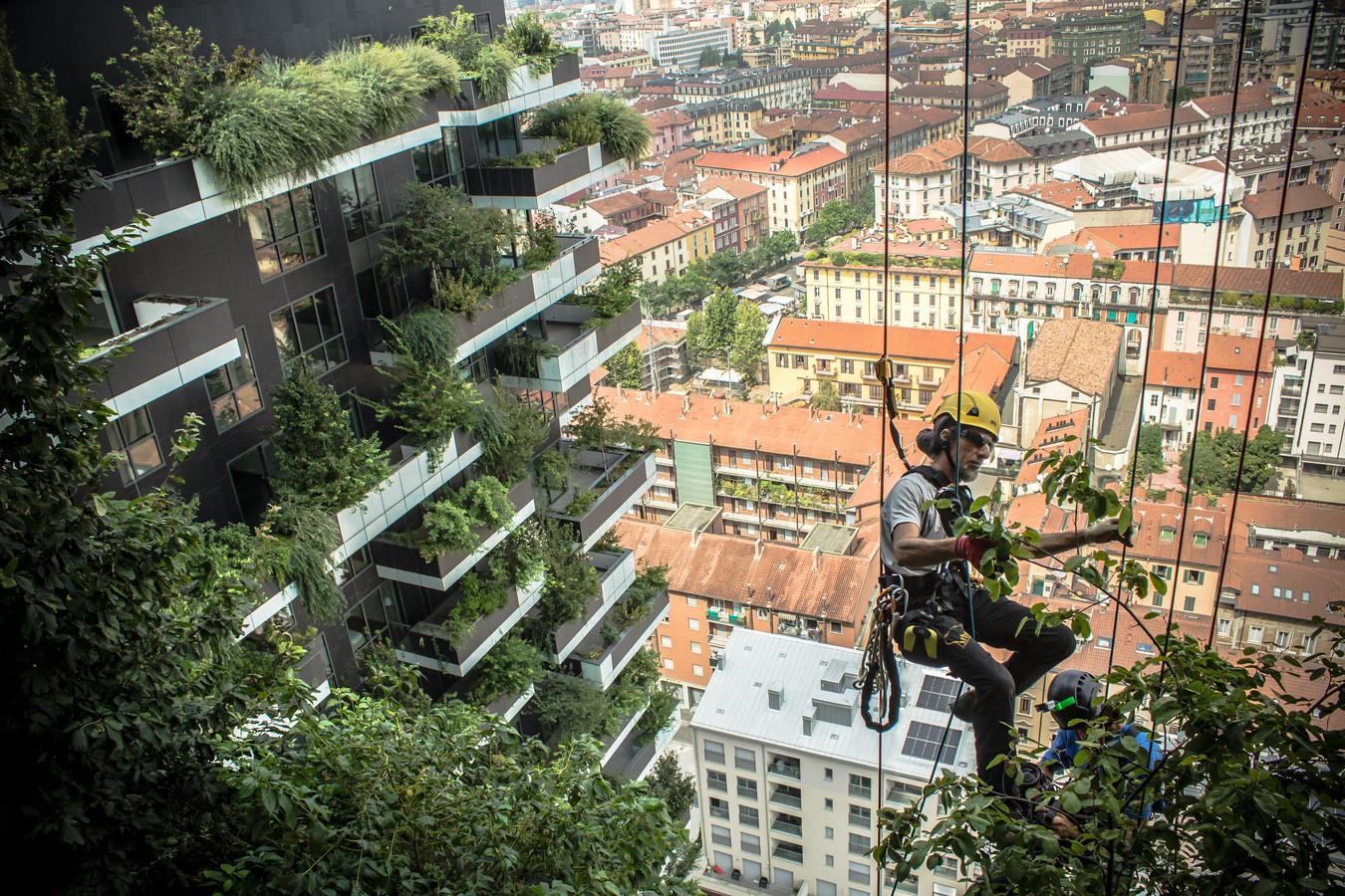 Een hangende tuinman onderhoudt het verticale bos in Milaan. Over enkele jaren zijn soortgelijke taferelen ook aan de Croeselaan in Utrecht te zien bij Wonderwoods.