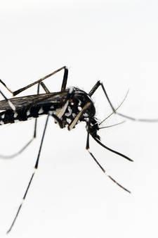 Drie gevaarlijke muggensoorten duiken op in Nederland