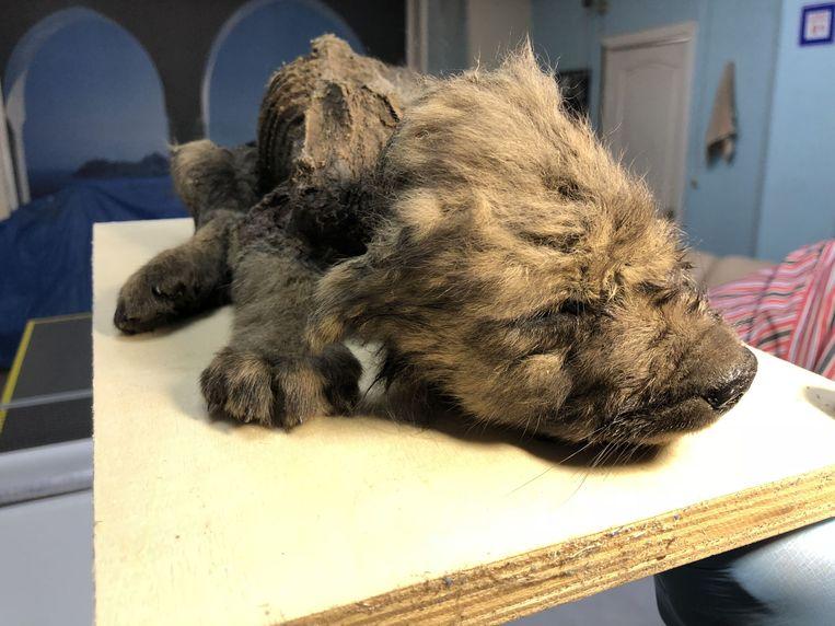 De 'puppy' is quasi perfect bewaard