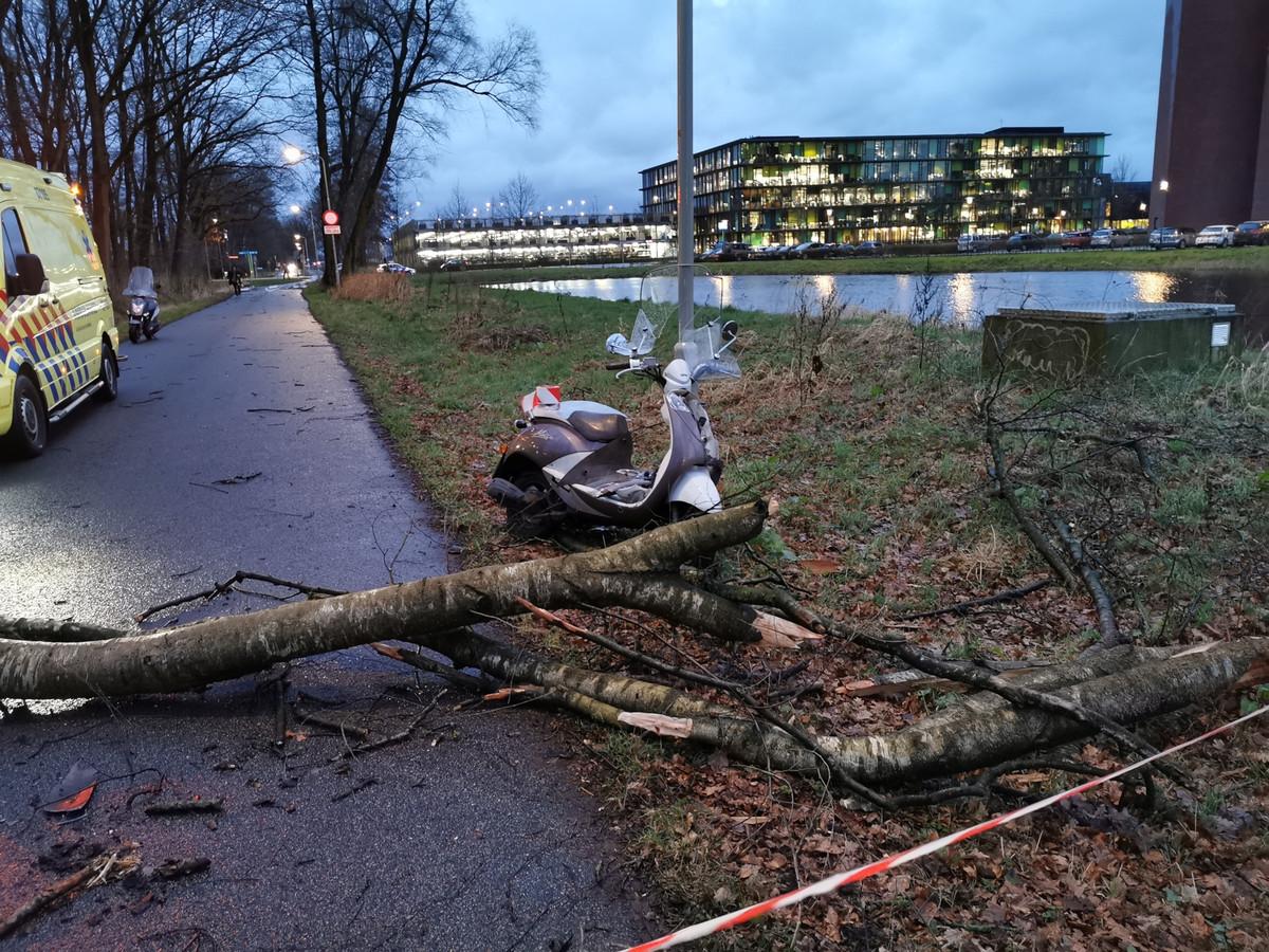 De boom is op het fietspad gevallen in Wageningen.