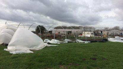 """Storm scheurt gloednieuwe serre zelfplukboerderij in Leest aan flarden: """"Maand nodig om dit te herstellen"""""""