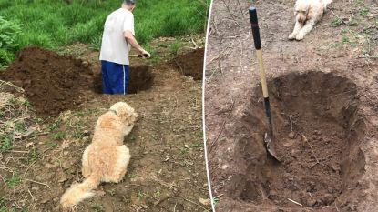 Hartverscheurende foto's tonen hoe baasje graf graaft voor hond terwijl dier toekijkt