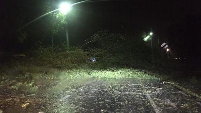 """Bomen omgewaaid door hevig onweer in Koksijde: """"Wees voorzichtig"""""""