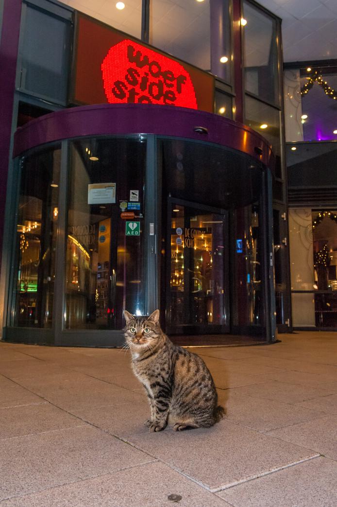 Deze Cyperse kat is een vaak geziene gast bij het entree van de Goudse Schouwburg.